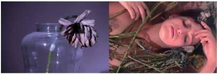 La-Passiflora-non-è-una-passeggiata-en-plein-air