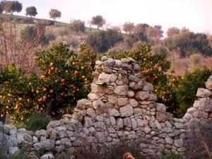 muro-a-secco-diroccato-aranceto