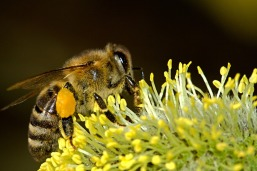 bees-18192_960_720